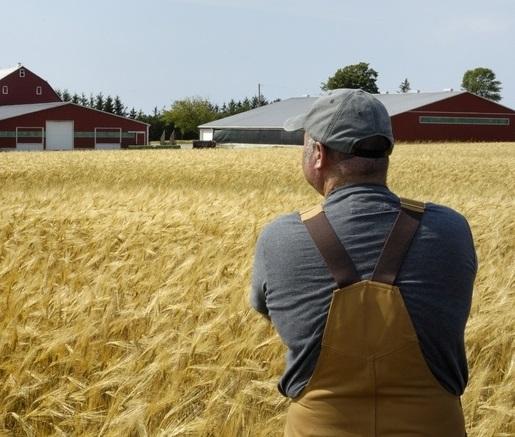 кредит для фермерских хозяйств
