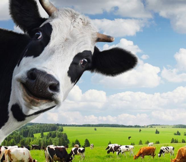 Кредит под залог скота